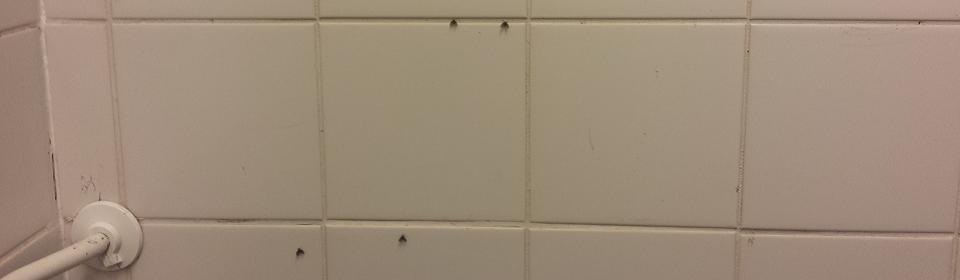 Rioolvliegjes in de badkamer